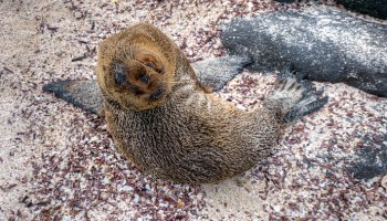 This Video Of Galapagos Sea Lion Pups Is Cuter Than You Might