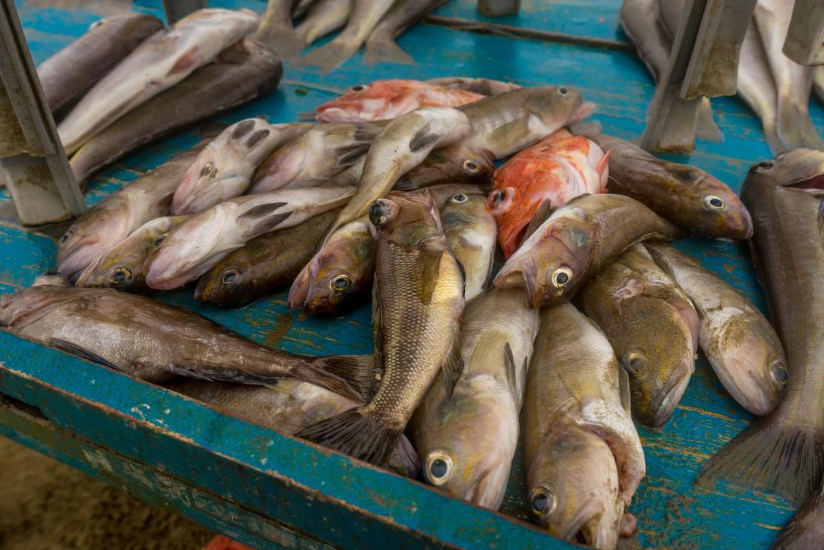 fisk puerto lopez