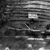 17 12-10-2012 Riverbanks Zoo and Garden in Black and White