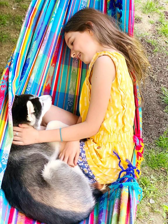 husky in a hammock