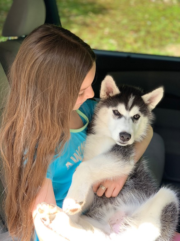 little girl with husky