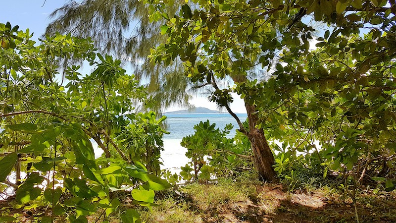 Seychelles - Random view on Praslin