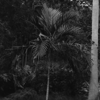 27 Garden of the Groves, Freeport, Bahamas in Black and White