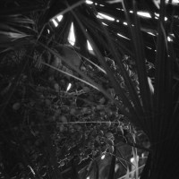 5 Garden of the Groves, Freeport, Bahamas in Black and White