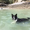 Beau having a dip