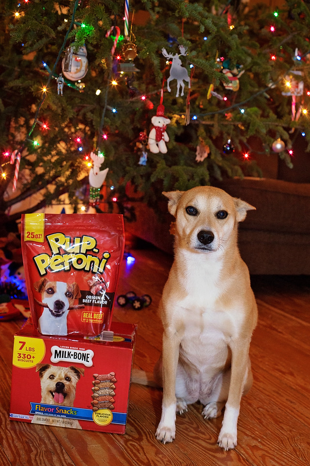 It's holiday time. Don't forget your dog! What does your dog or dog lover in your life REALLY want for the holidays? A stocking or gift box full of treats! #ad