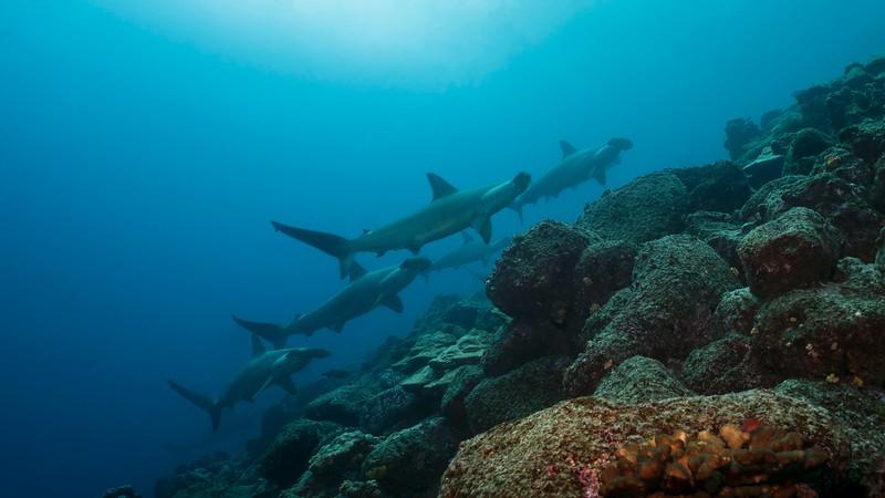 参观加拉帕戈斯群岛——海岸群岛——海岸群岛的海岸