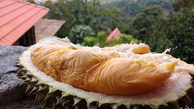Penang Durian