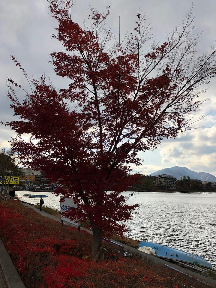 Lake Kawaguchiko