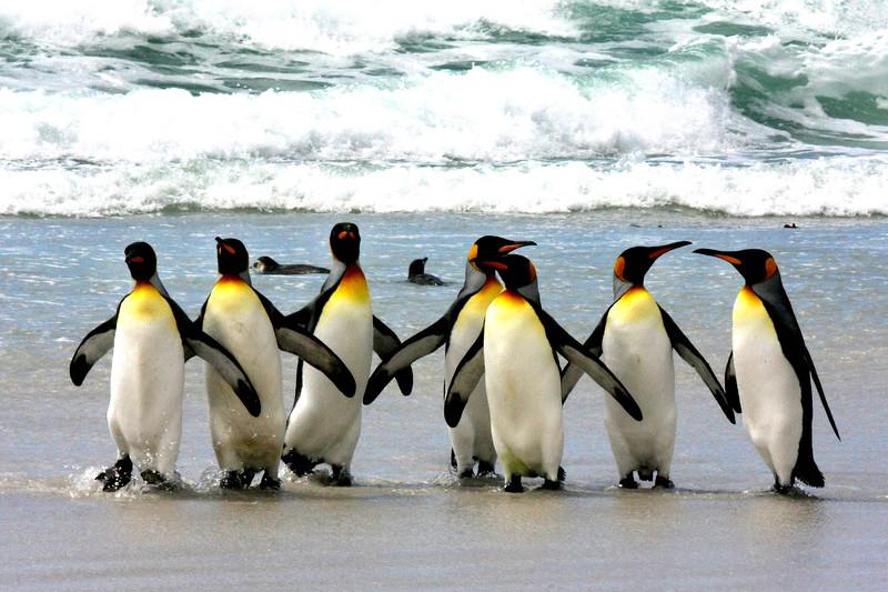 岛屿群岛——葡萄牙企鹅