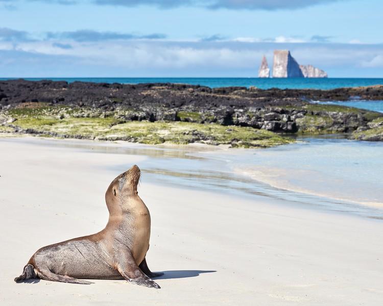 去加拉帕戈斯群岛——加拉帕戈斯群岛的狮子