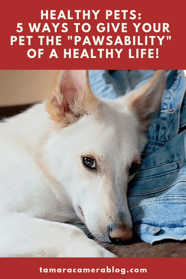 #sponsored We have two dogs, 1 cat, and now 20 chickens. Here are 5 ways we give them the