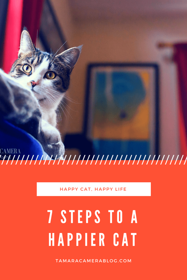Want a happier cat? These 7 steps will show you how to get closer to your cat with the best products, the best toys, and the best love! #Catego #Feliway #ad
