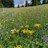 More Paradise Park wildflowers