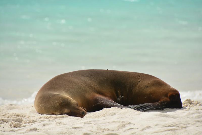 参观加拉帕戈斯群岛——群岛群岛群岛海岸群岛