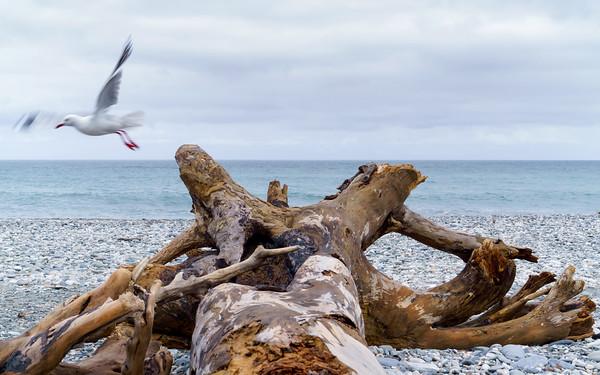 New Zealand - Wild West Coast