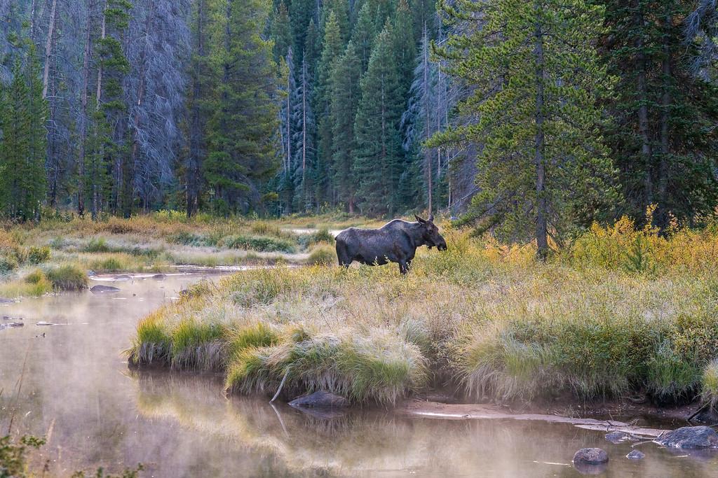 Piney Lake Gore Range Colorado