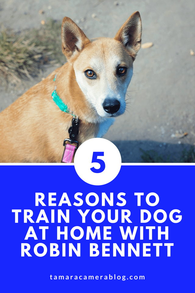 Are you training your dog or puppy? You can do it easily at home with Robin Bennett. Here are 5 reasons you can't miss this amazing offer. #ad #RaisingPuppy