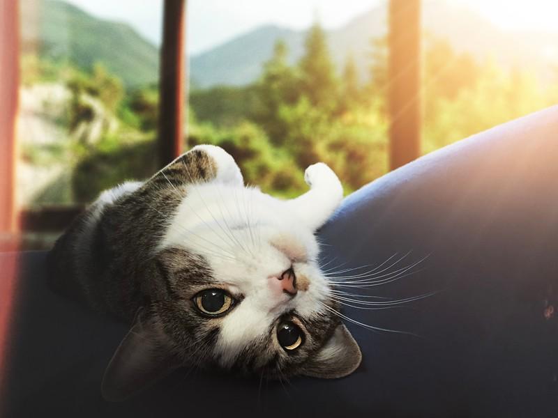 indoors cat