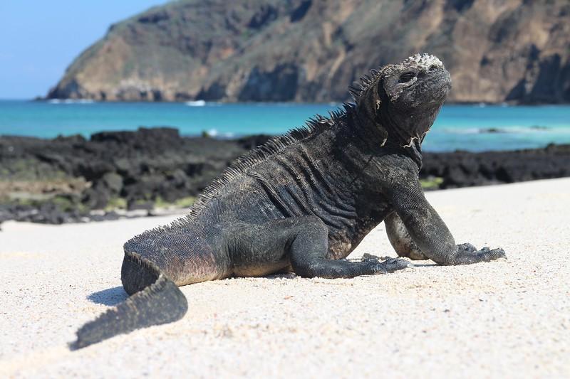 参观加拉帕戈斯群岛——小岛群岛和海洋岛屿
