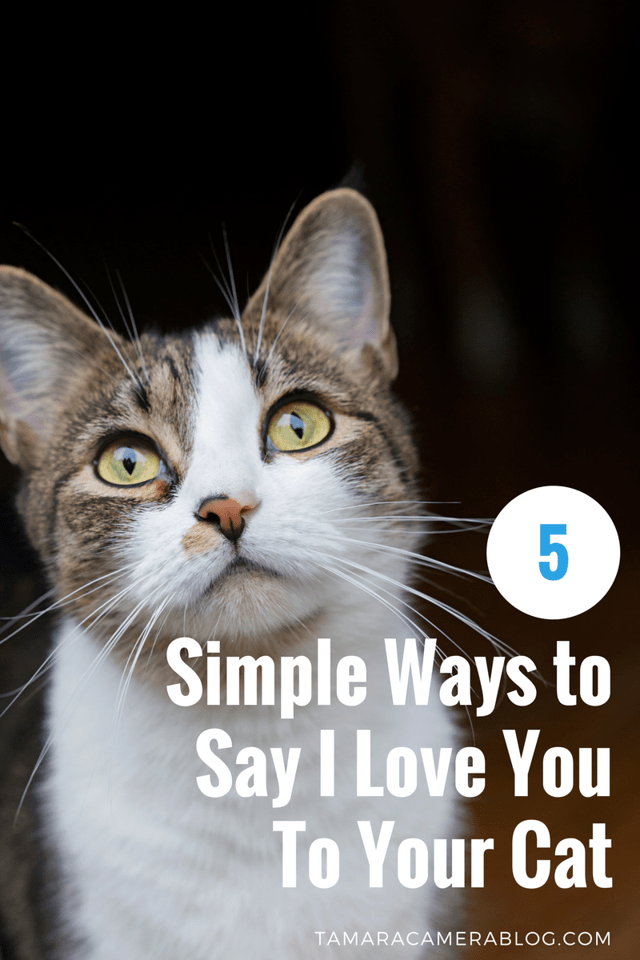 The love you have for your cat is simple, right? You want to make them as happy as they makes you. Here are 5 simple ways to show your cat some BIG love #ad
