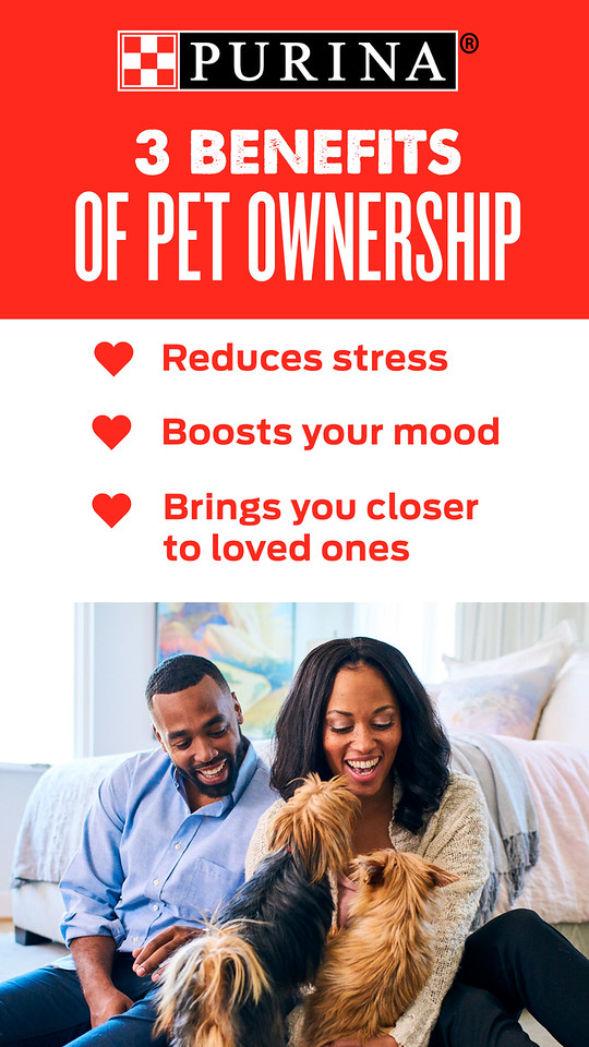 It's easy to love your pet, and also easy to celebrate National Love Your Pet Day! Read all about these five ways to love your pet on a day about loving your pet! #PurinaPartner