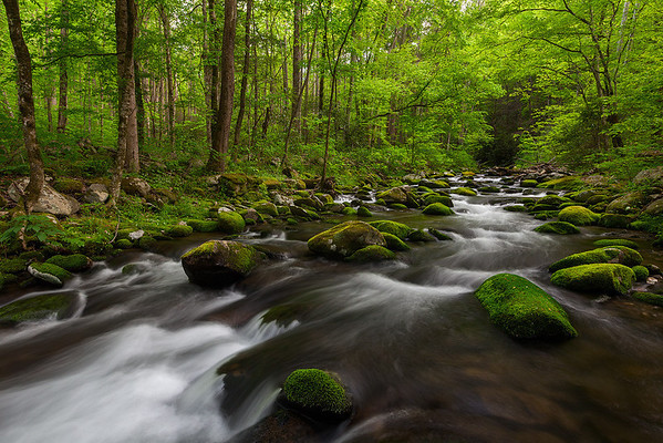 Roaring Fork cataract green forest by Ron Coscorrosa