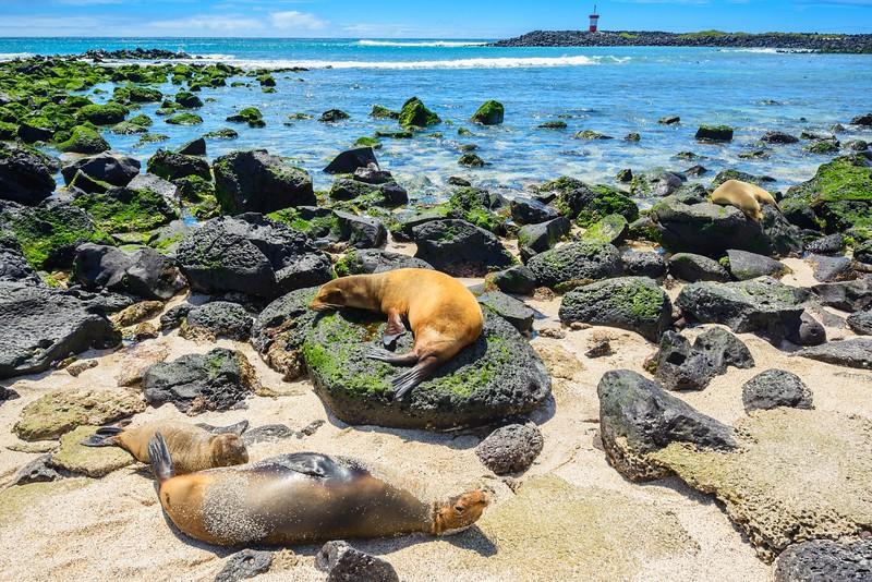 参观一下加拉帕戈斯群岛——海岸群岛海岸群岛