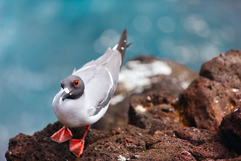 去参观加拉帕戈斯群岛——鸟