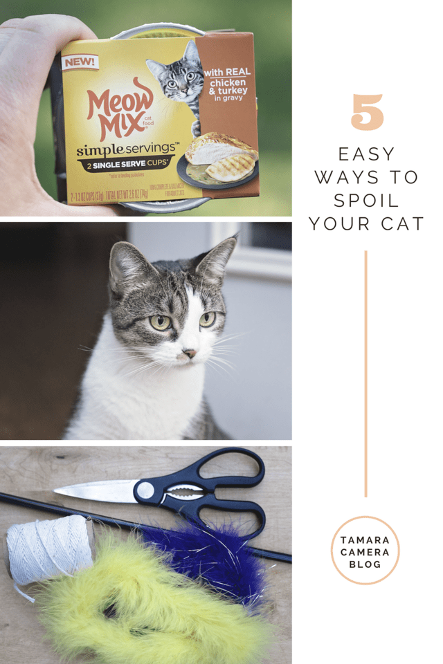 Here are 5 EASY ways to spoil your cat, including a #DIY Feather Toy for cats. Feed your cats the mess-free food you know they'll LOVE. #ad #MeowMixatTarget