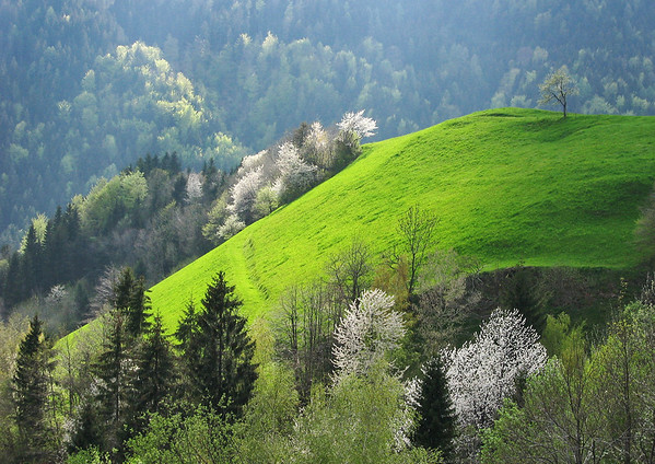 Green Slovenian landscape by Ana Pogacar photography