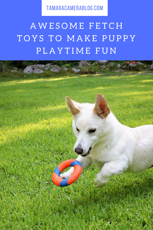 These awesome fetch toys will make puppy playtime more fun than ever. Also enter the giveaway to win them for your own dog to enjoy! #ad #MakeFetchHappen