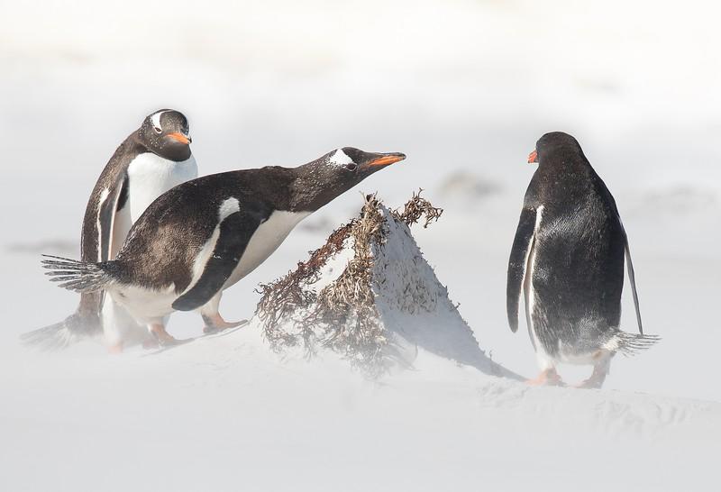 夏威夷群岛——企鹅企鹅