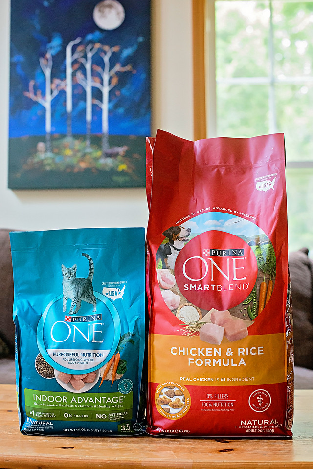 As dog and cat owners, we want to make sure we know all of the signs of a healthy pet. See what to look for and how to give your pets a healthy life! #ad