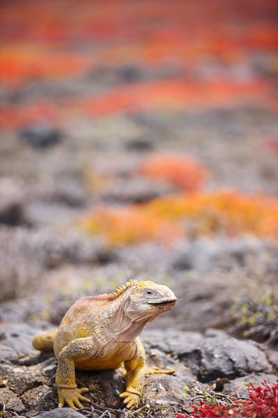 参观加拉帕戈斯群岛群岛群岛——加勒比海群岛群岛群岛