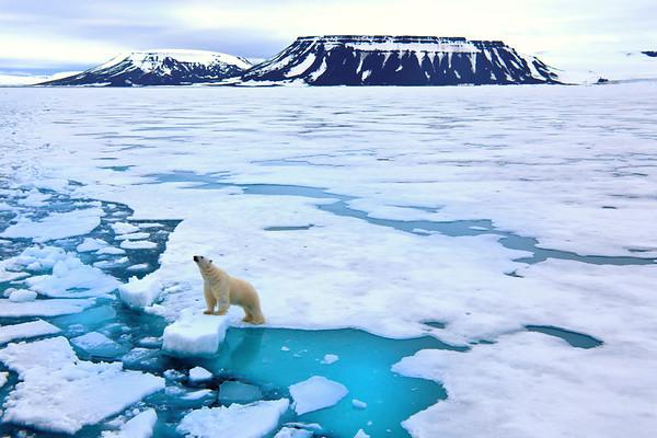 北极北极北极的北极:你想做什么决定