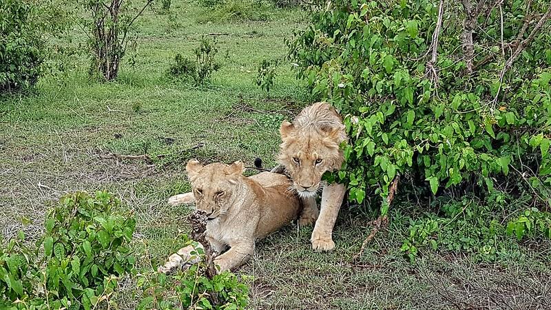 Travel favorites - Masai Mara