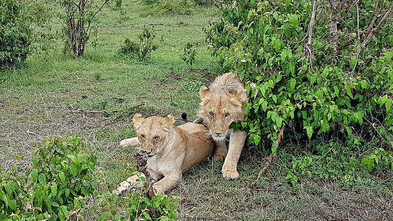 Travel favorites - Masai Mara