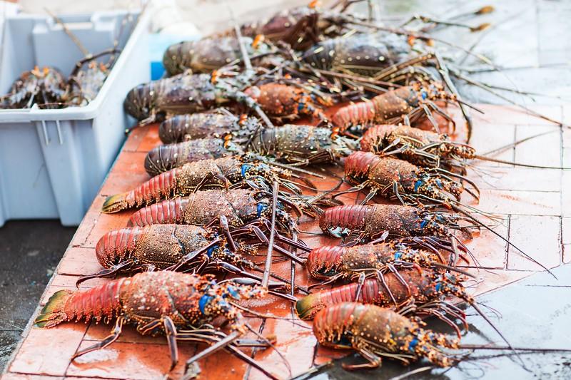 参观加拉帕戈斯群岛——龙虾群岛——龙虾群岛的龙虾