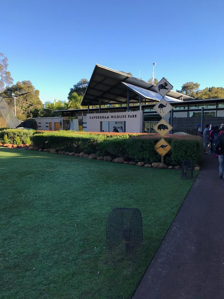 Kangaroo Feeding at Caversham Wildlife Park
