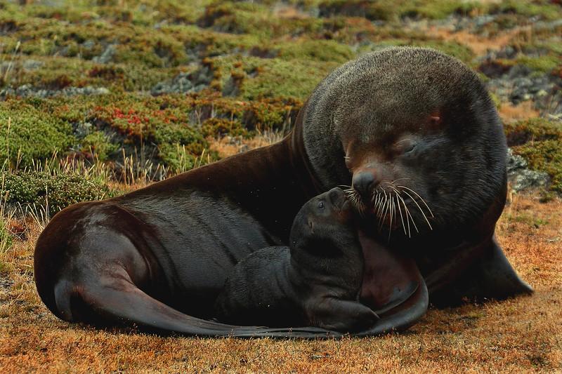海洋岛屿——海狮群岛