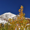 Aspens and Mt Olsen