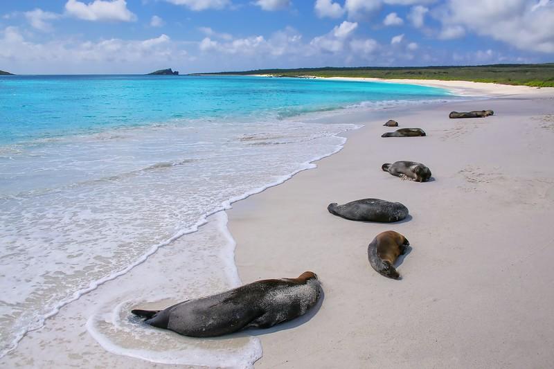 参观加拉帕戈斯群岛——加勒比海群岛——海岸群岛的珊瑚礁