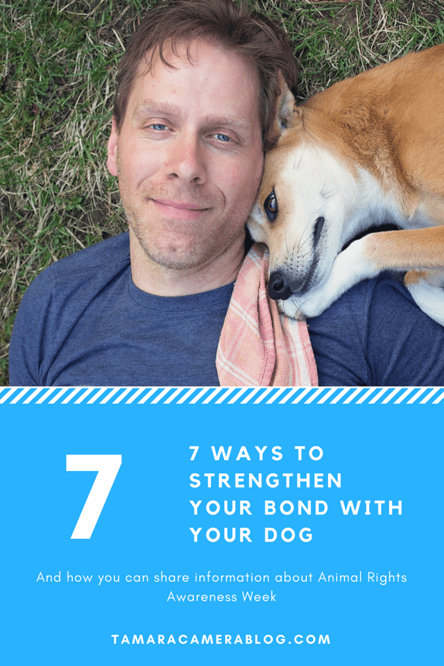Do you love your dog like crazy but you don't always have as much time to bond as you'd like? Try the 7 tips for strengthening that important bond! #ad #ILY