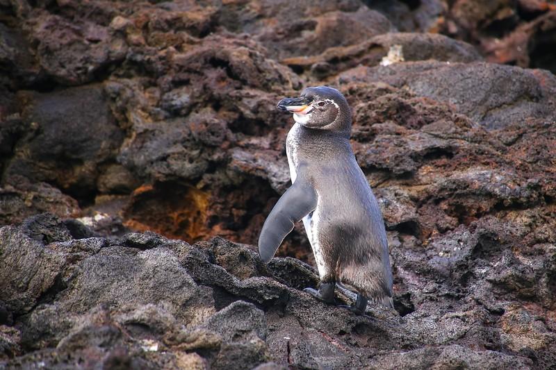 参观加拉帕戈斯群岛——加拉帕戈斯群岛——加拉帕戈斯群岛群岛