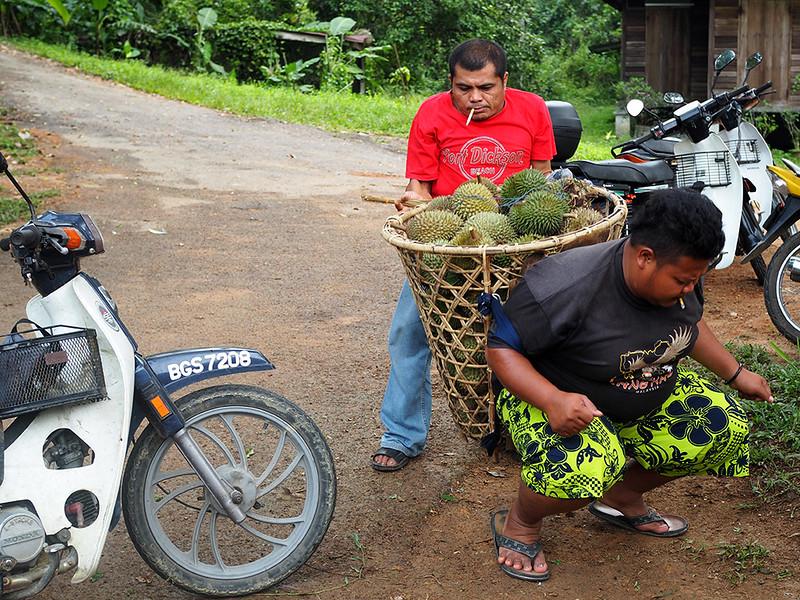 wild durian