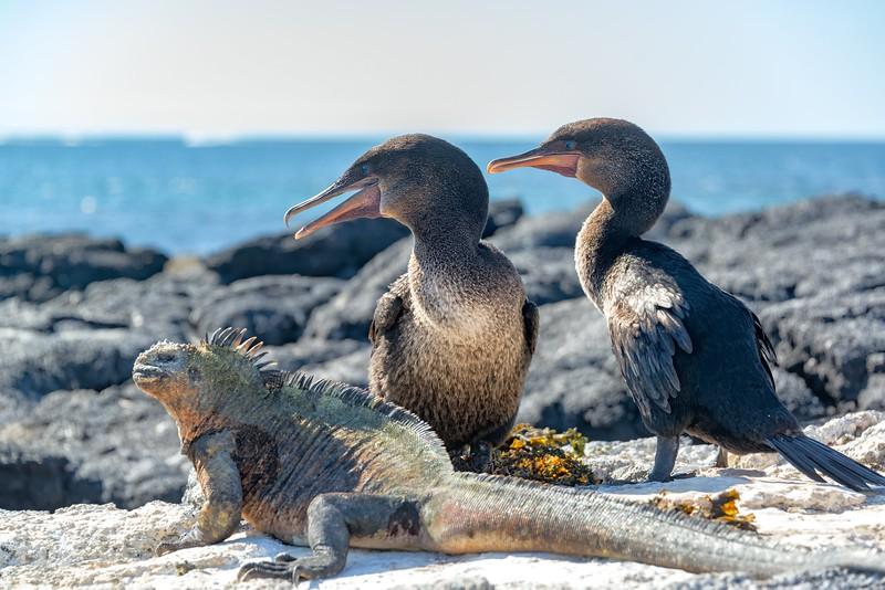 加拉帕戈斯群岛——海洋和珊瑚礁的动物