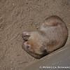 Sleepy wombat. That is all.