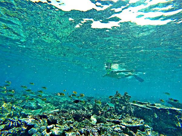 Maldives on a budget - snorkeling