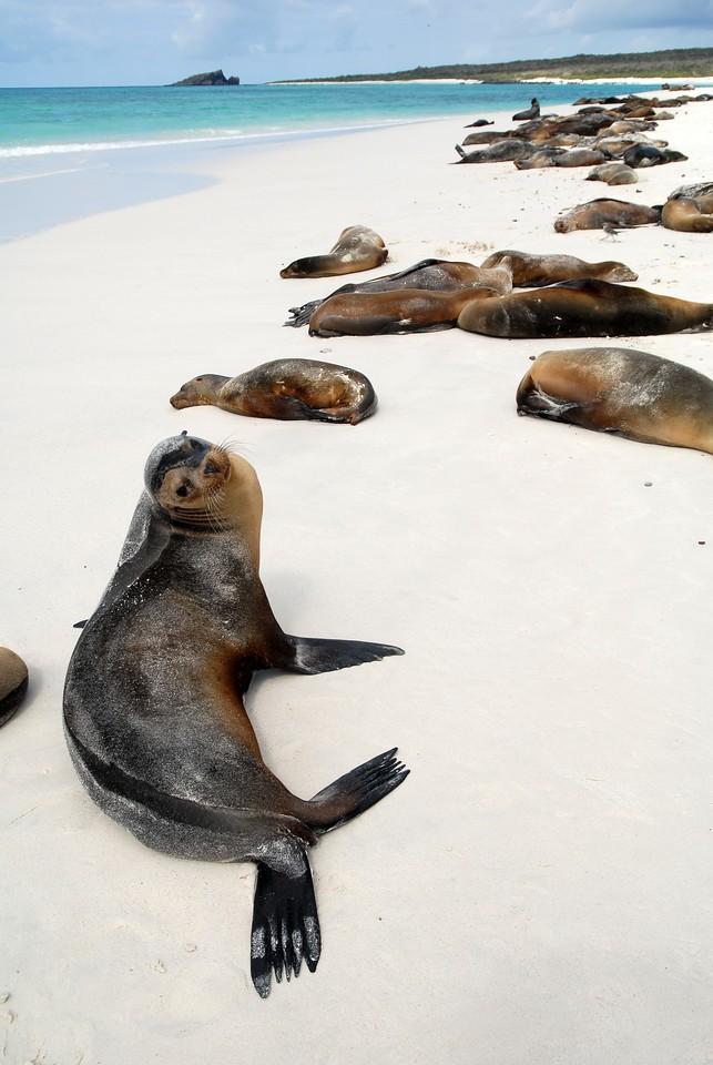 参观加拉帕戈斯群岛——加拉帕戈斯群岛的狮子和狮子